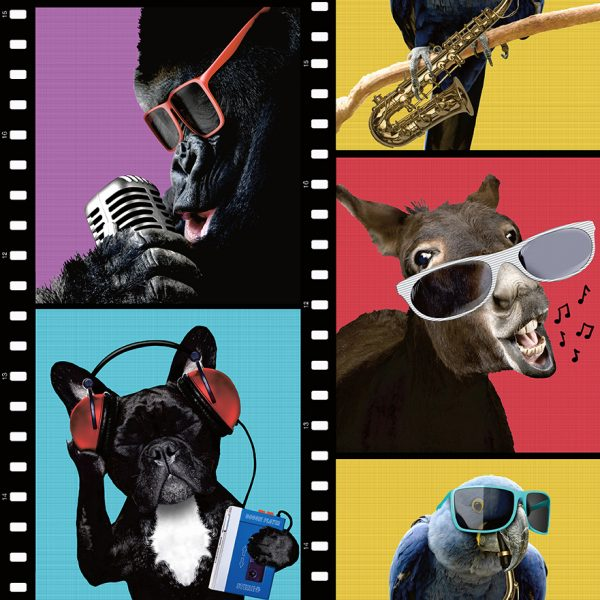 12040-animals-on-film-product